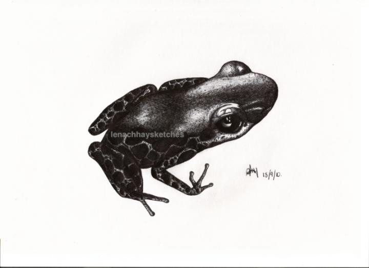 Frog-18-09-10-800pf