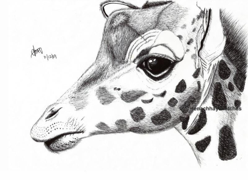 Giraffee-11-12-09 -800pf