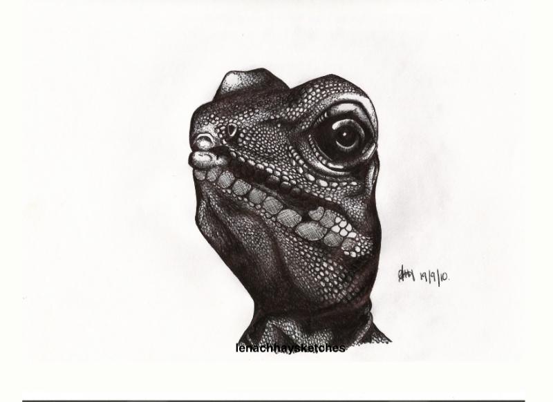 Iguana-19-09-10-800pf