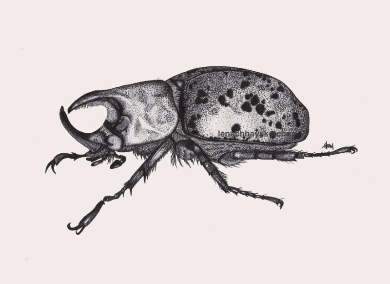 Unicorn Beetle-15-12-12-800pf