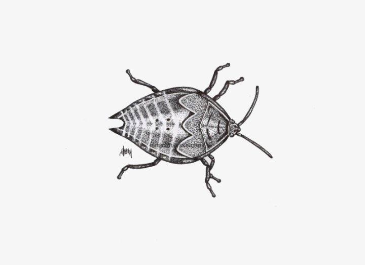 Beetle-08-12-14-800pf