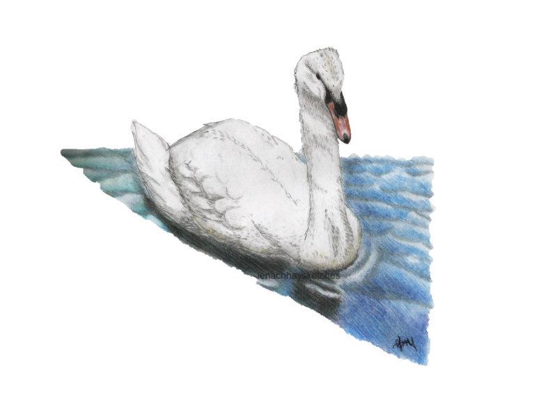 Swann-Colour-12-12-14-800pf