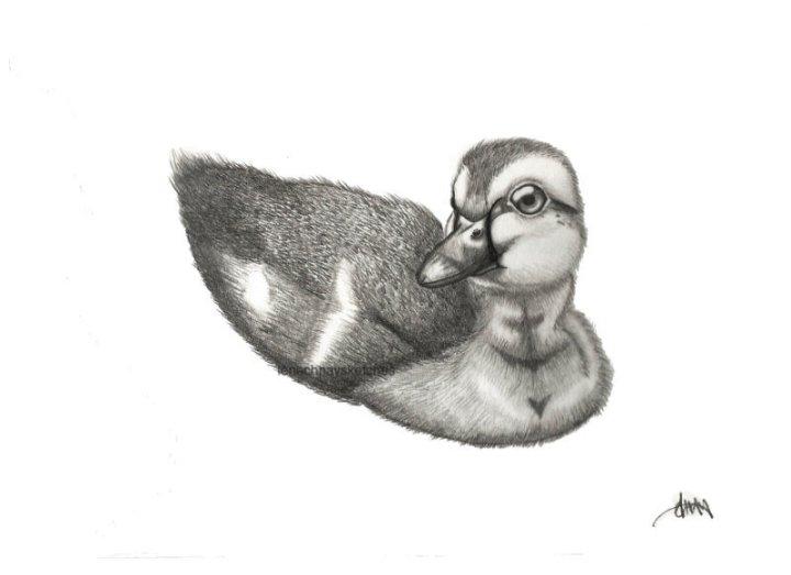 Duckling-25-08-17-800pf