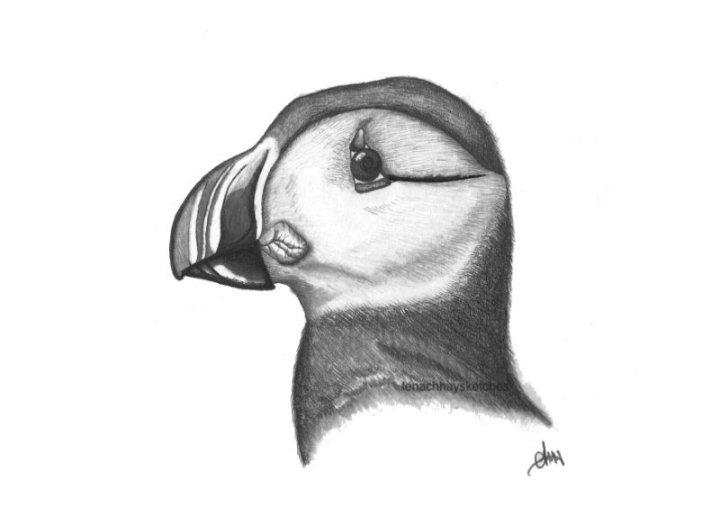 Puffin Bird-24-08-17-800pf