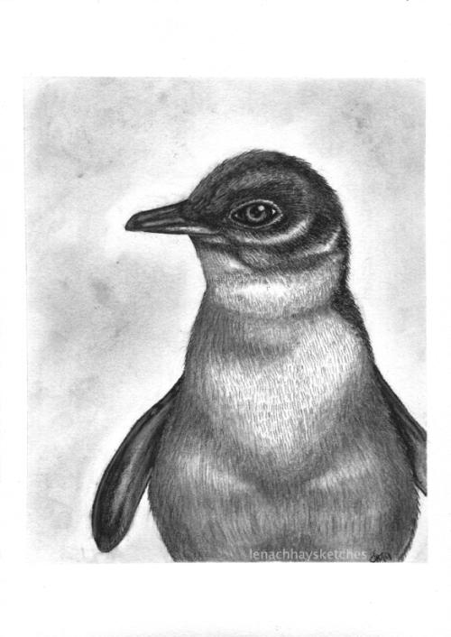 Blue Penguin 260519-1 WM300x