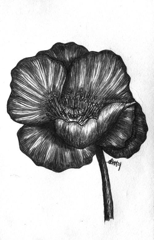 Poppy Flower 270519-1 WM300x