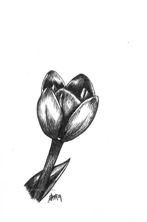 Tulip 150519 WM300x