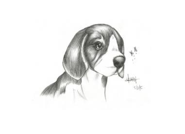 Beagle-05-02-05-800pf
