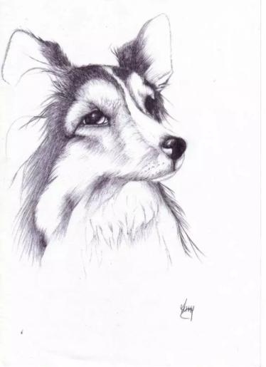 Dog 2006
