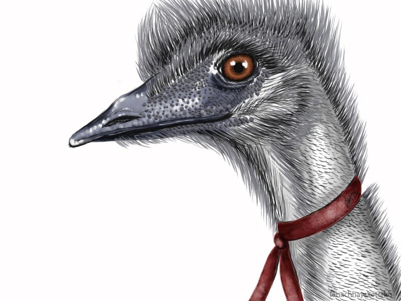 Emu 180619 300x