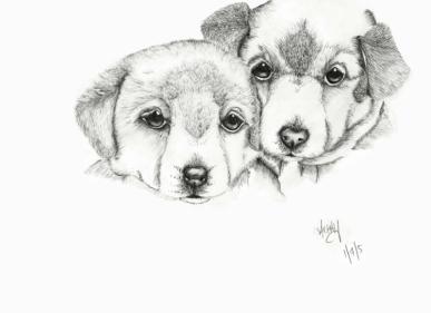 Labrador-01-07-05-800pf