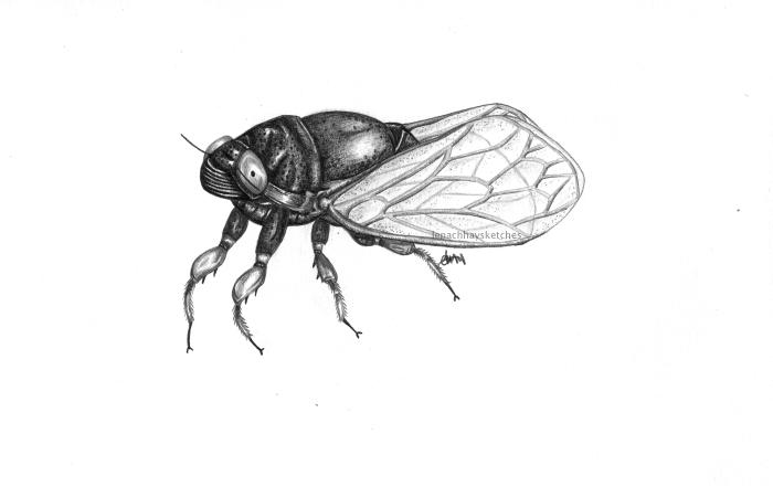Periodical Cicada 030619 WM300x