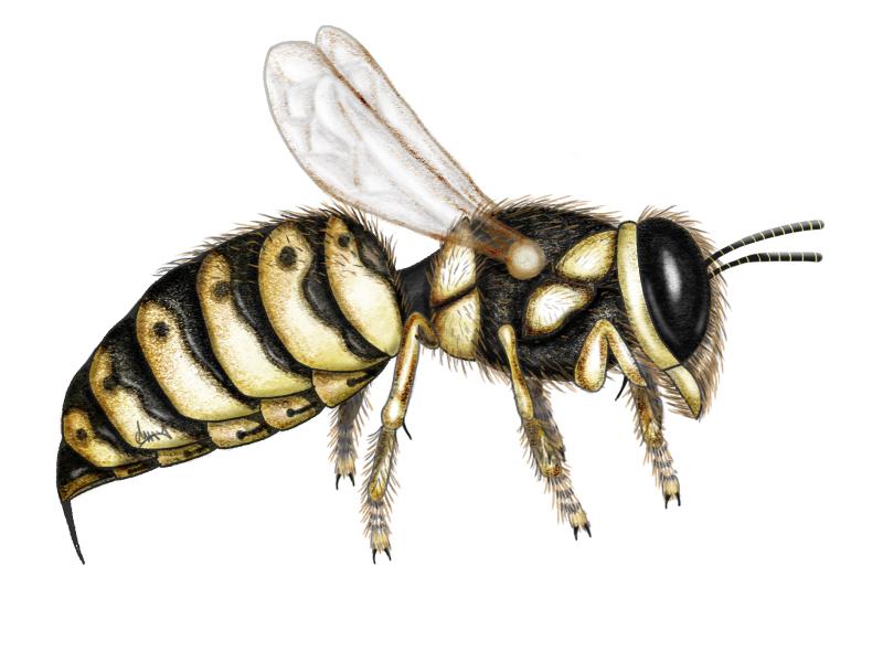 Wasp 090619 300X