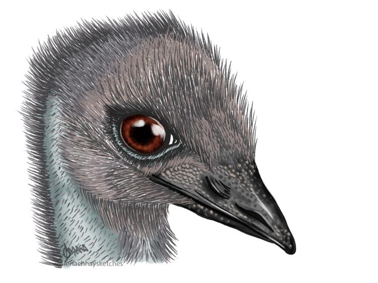 Emu 080719 300x