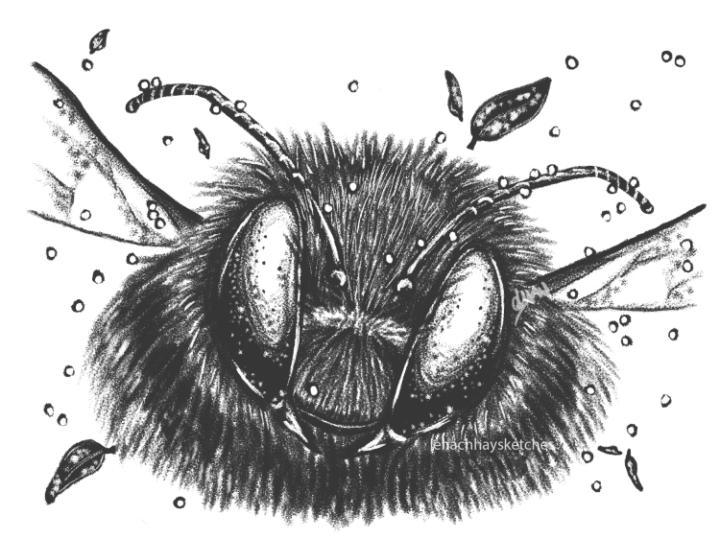 Bee 080120 300x