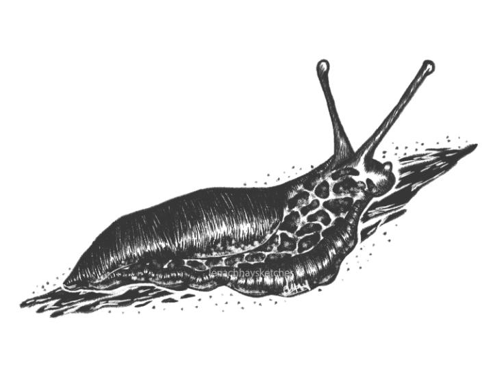 Slug – Finding A Way BackHome