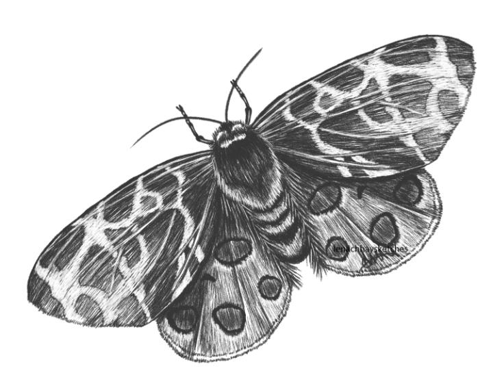 Garden Tiger Moth 030220 750x300x