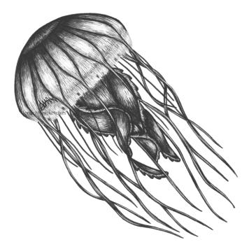 Jellyfish 260220 700 300x