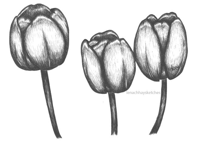 Tulips 170520 650x